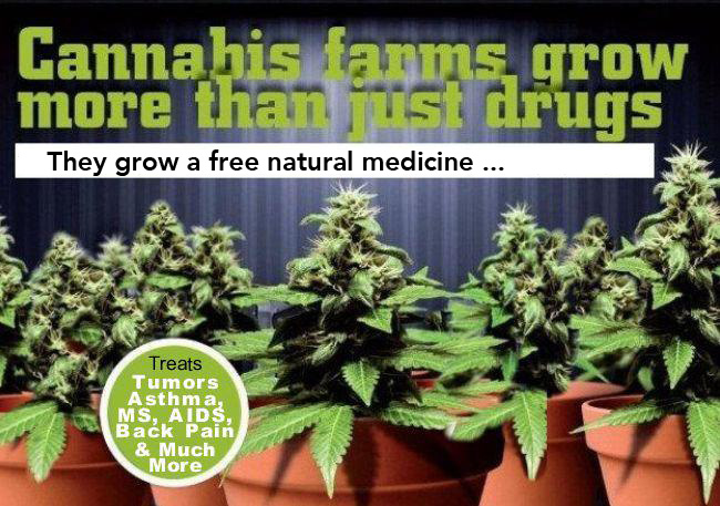 Cannabis farms grow more than just drugs, they grow a free medicine.