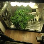 Know something about cannabis cultivation?
