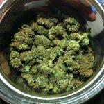 cannabis_pic