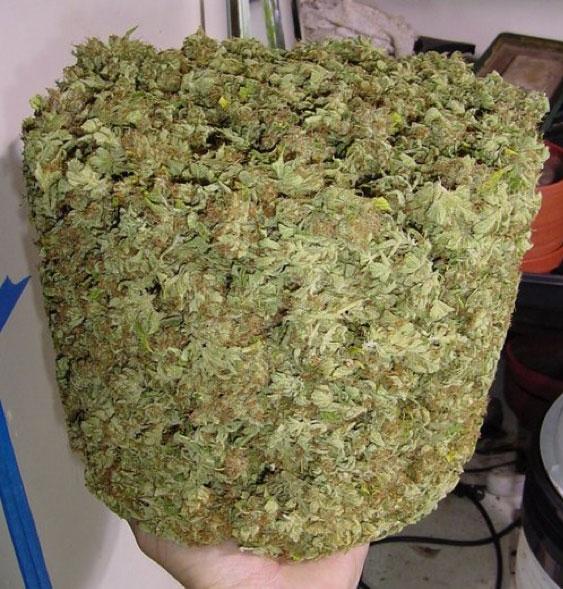 Herbal cannabis