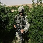 UK cannabis film project