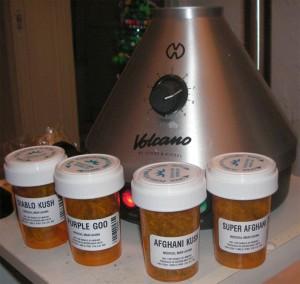 A selection of cannabis, Diablo Kush, Purple Gold, Afghani Kush, Super Afghani