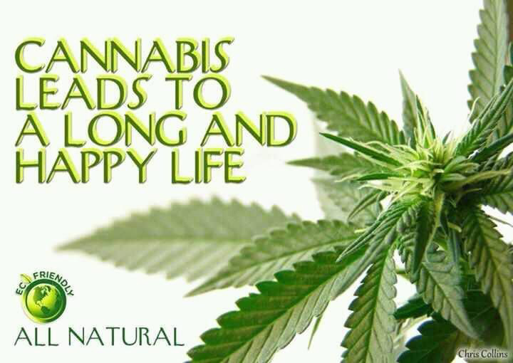 Cannabis (skunk) leads to a long and happy life.