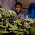ITV documentary argues for legalisation of cannabis