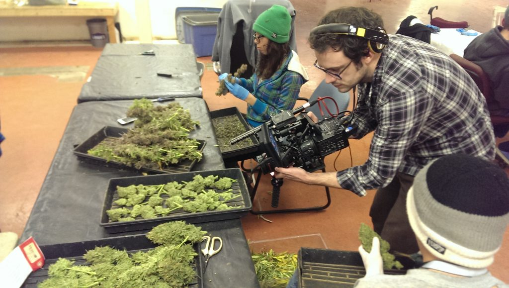 Dale Beaumont-Brown filming for GrassRoots, The Cannabis Revolution