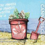 brighton-cannabis